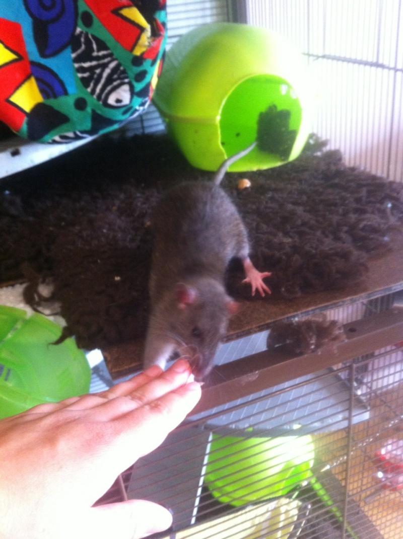 Les petits ratous kinder de miss Tagada 🐀 - Page 5 Img_2310