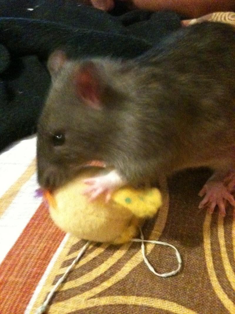 Les petits ratous kinder de miss Tagada 🐀 - Page 5 Img_2313