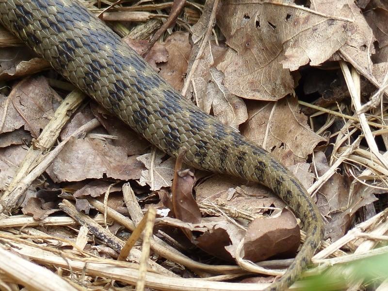 Quizz le vent des snakes P1070412
