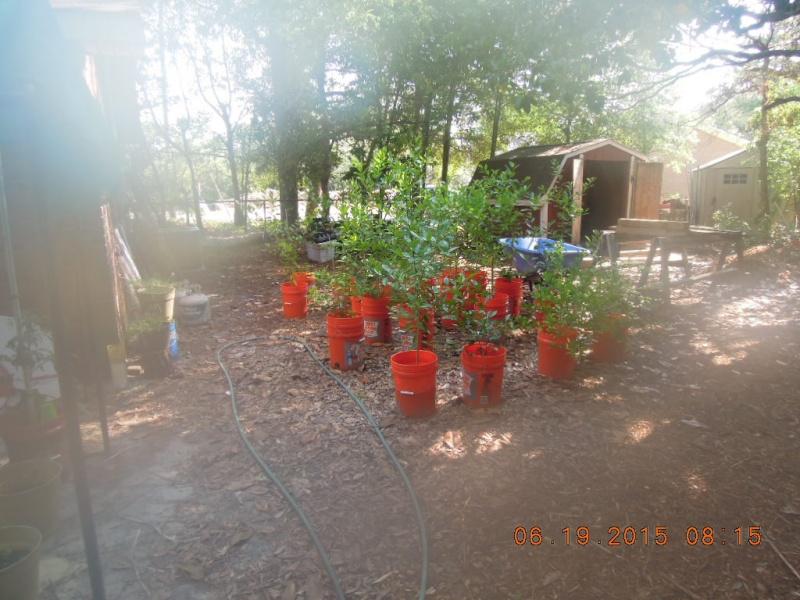 Lower South June 2015 Dscn2227