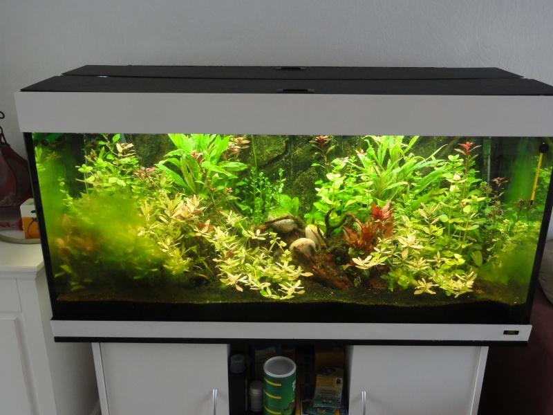 sol aquarium Dsc02911