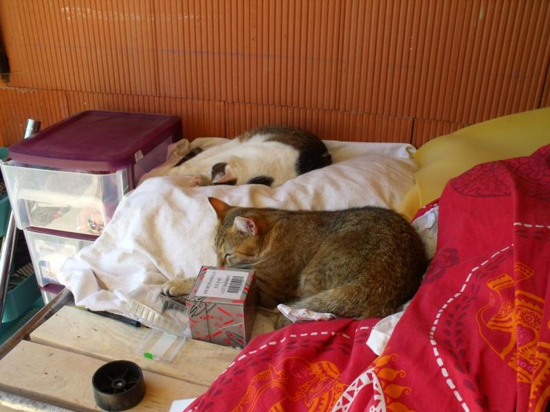 JUNO - tigré clair - (Jedy est adopté) - 05/2014  Dscf9615