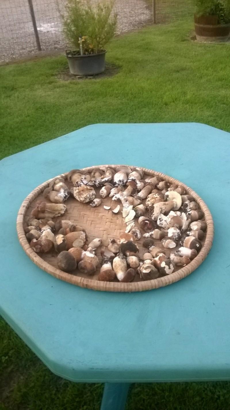loisir les champignons !! - Page 16 Image22