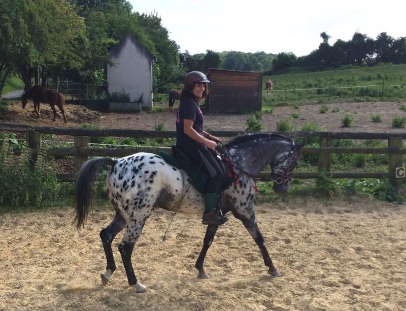 Talisman Horses, les news Captur15