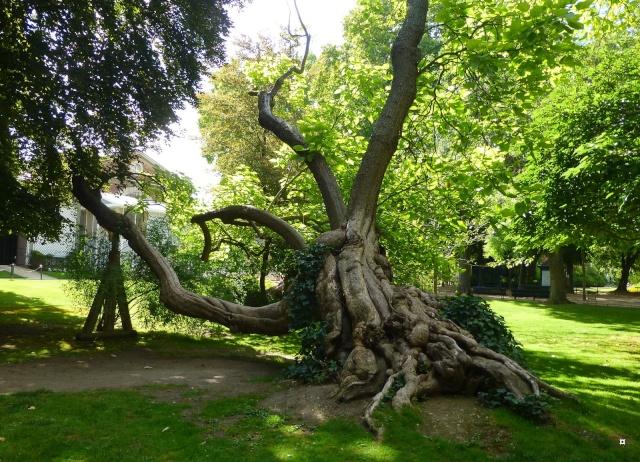 Choses vues dans le jardin du Luxembourg, à Paris - Page 4 Concer11