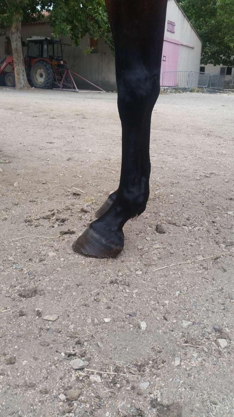 Avis sur les pieds nus de ma juju 20150712