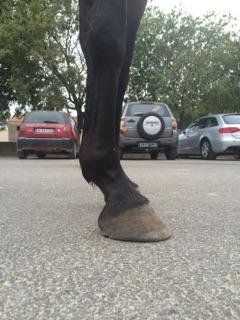 Avis sur les pieds nus de ma juju Img_2010