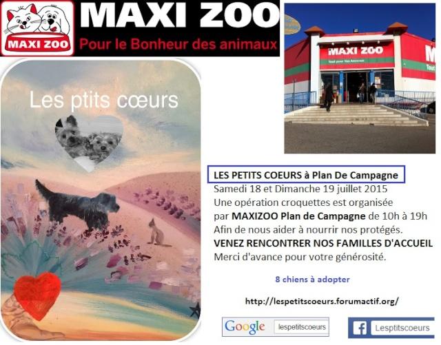 MAXI ZOO le 18 et 19/07/2015 Temp212