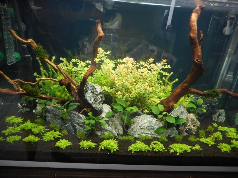 Avis  AquaGrowth Soil - Prodibio Dscn5912