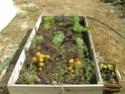 Jardin en carrés - Page 2 Jardin10