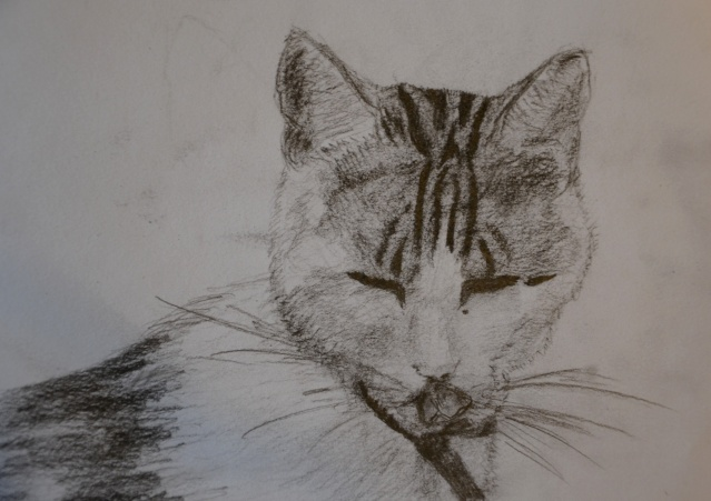 Mes dessins - Page 4 Dsc_1415
