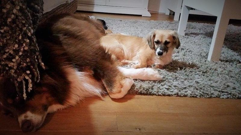 Noëlle, petite chienne née en octobre 2014 11925910