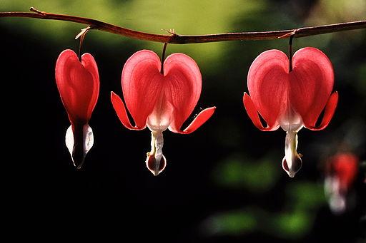 Nos amies les fleurs (Symbolisme) 3_blos10
