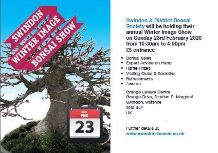 Swindon 'Winter Image' Bonsai Show 2020 [UK] Good_c10