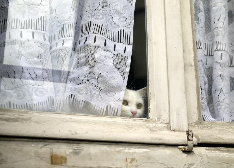 """"""" les rideaux.............."""" P1070310"""