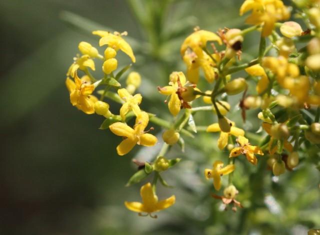 Un oeuf sur une plante Fleurs10