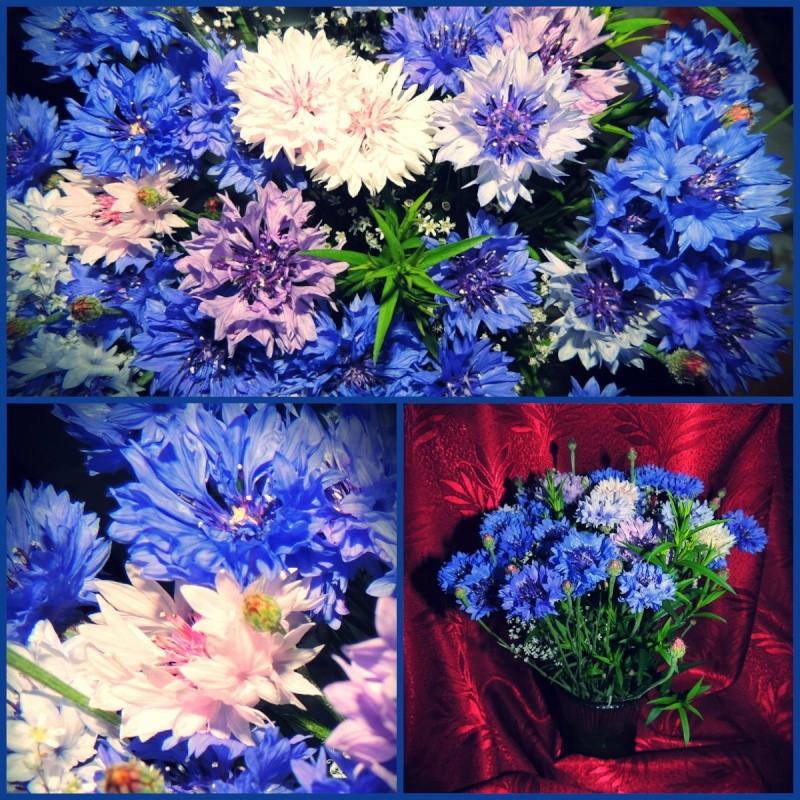 Фотографии цветов и деревьев - Страница 10 Collag10
