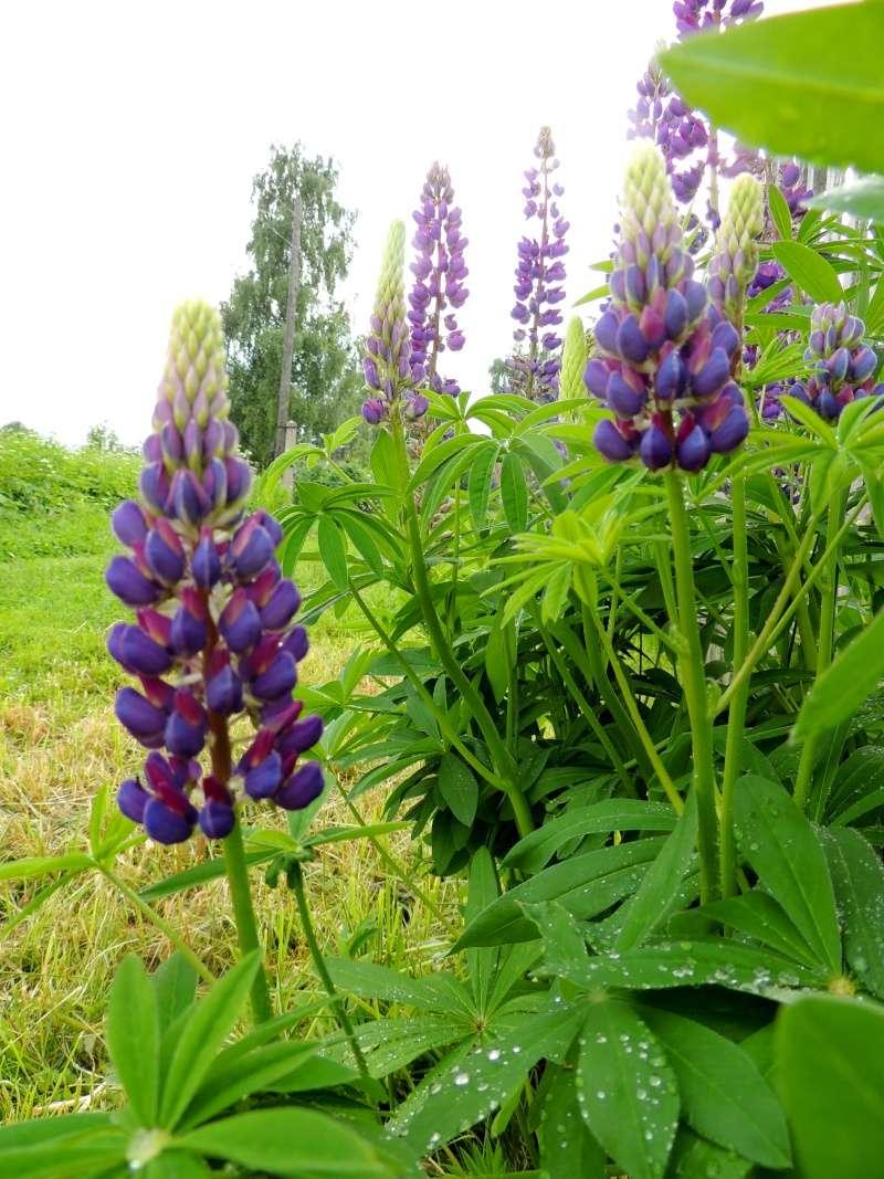 Фотографии цветов и деревьев - Страница 10 Dscn5529