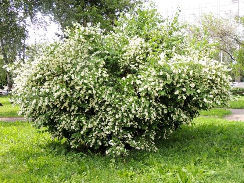 Фотографии цветов и деревьев - Страница 10 Dscn5610