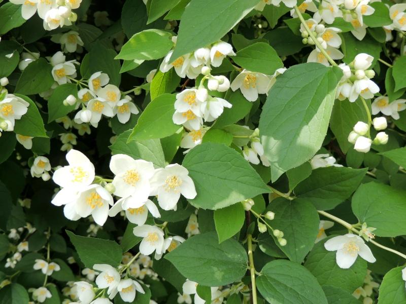 Фотографии цветов и деревьев - Страница 10 Dscn5611