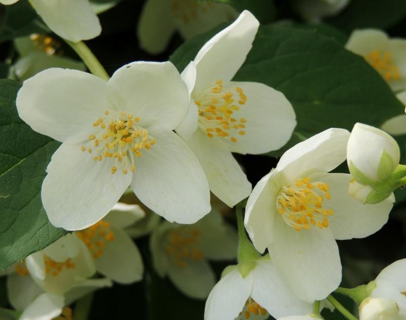 Фотографии цветов и деревьев - Страница 10 Dscn5612