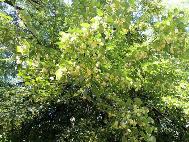 Фотографии цветов и деревьев - Страница 10 Dscn5910