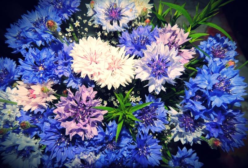 Фотографии цветов и деревьев - Страница 10 Dscn6111