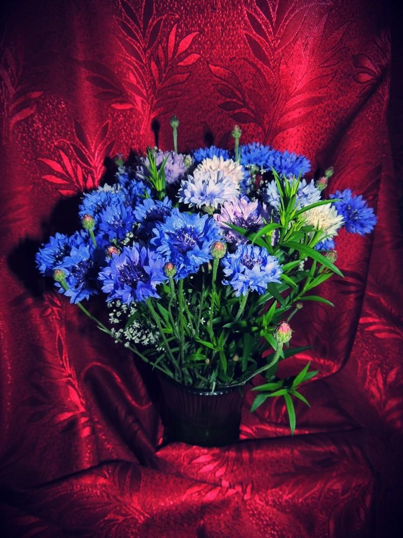 Фотографии цветов и деревьев - Страница 10 Dscn6112