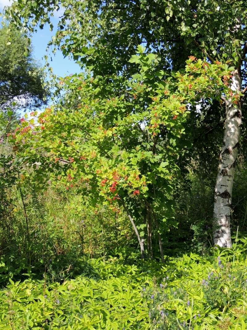 Фотографии цветов и деревьев - Страница 10 Dscn6538