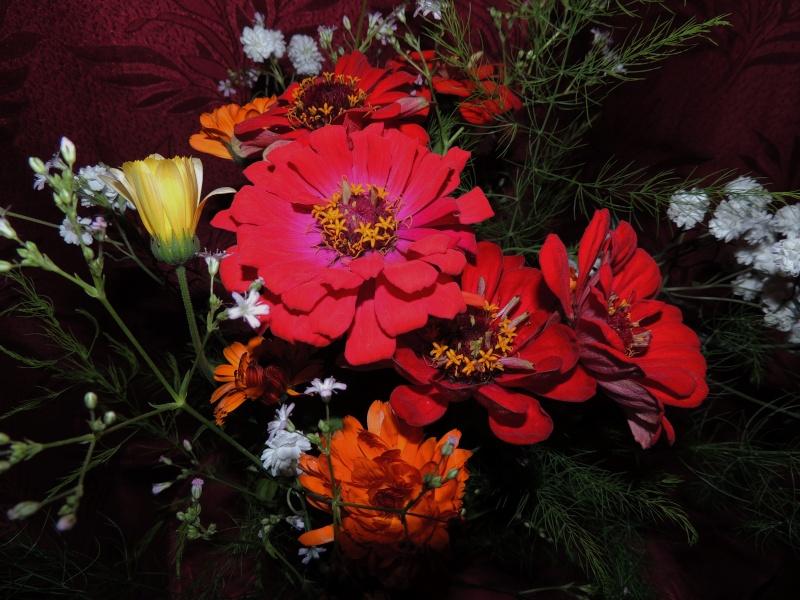 Фотографии цветов и деревьев - Страница 10 Dscn6755