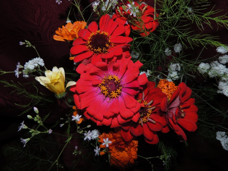 Фотографии цветов и деревьев - Страница 10 Dscn6756