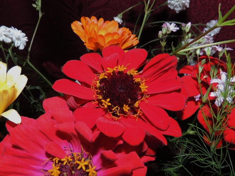 Фотографии цветов и деревьев - Страница 10 Dscn6757