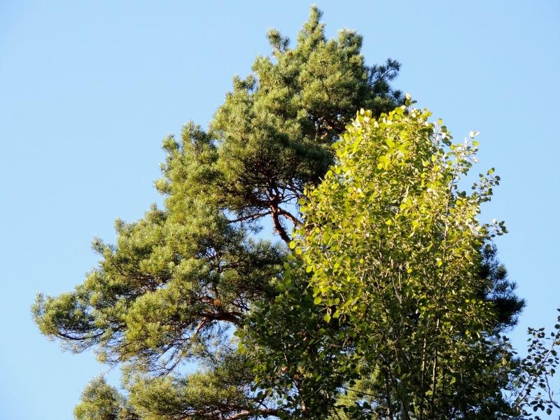 Фотографии цветов и деревьев - Страница 10 Dscn7114