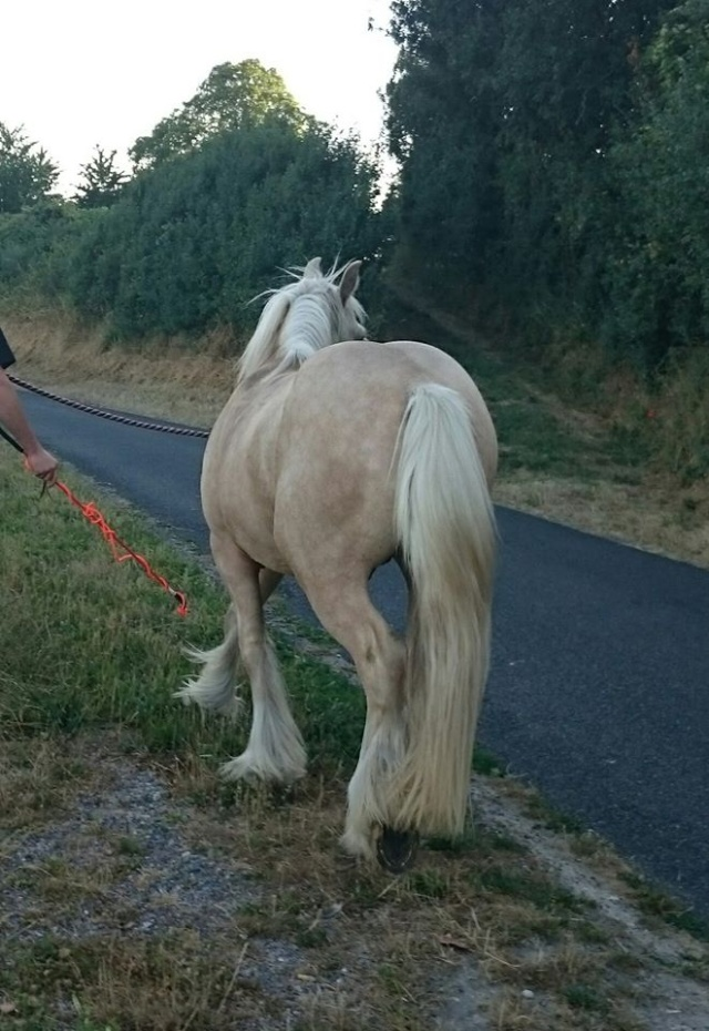 Passion Irish Cob en France - Portail 10987310