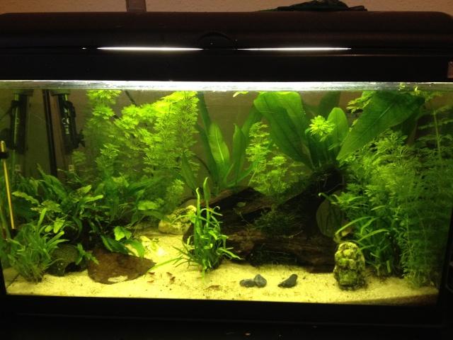 Mon Aquarium 54L Img_5610