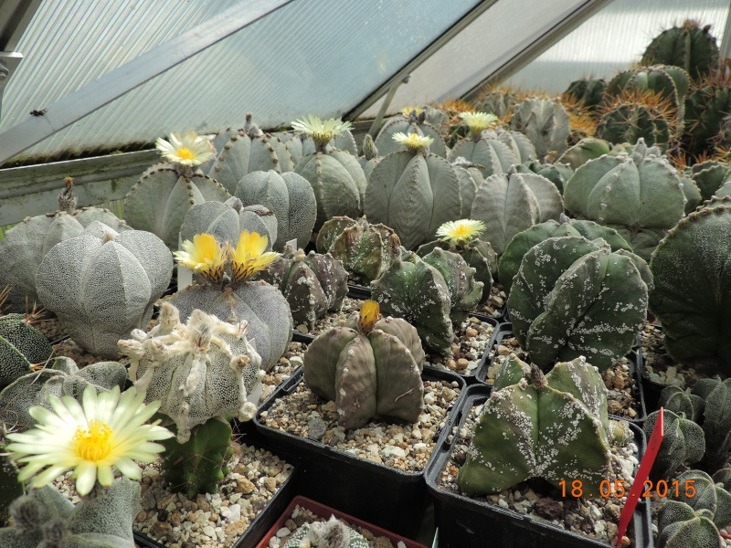 Cacti and Sukkulent in Köln, every day new flowers in the greenhouse Part 125 Bild_141