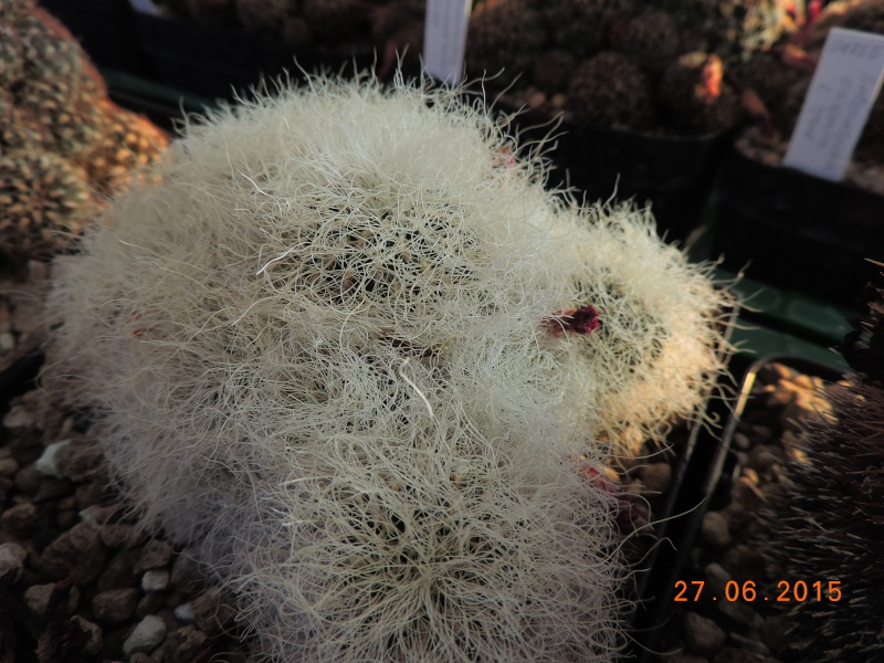 Cacti and Sukkulent in Köln, every day new flowers in the greenhouse Part 126  Bild_250