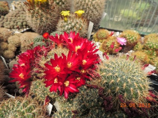 Cacti and Sukkulent in Köln, every day new flowers in the greenhouse Part 126  Bild_284