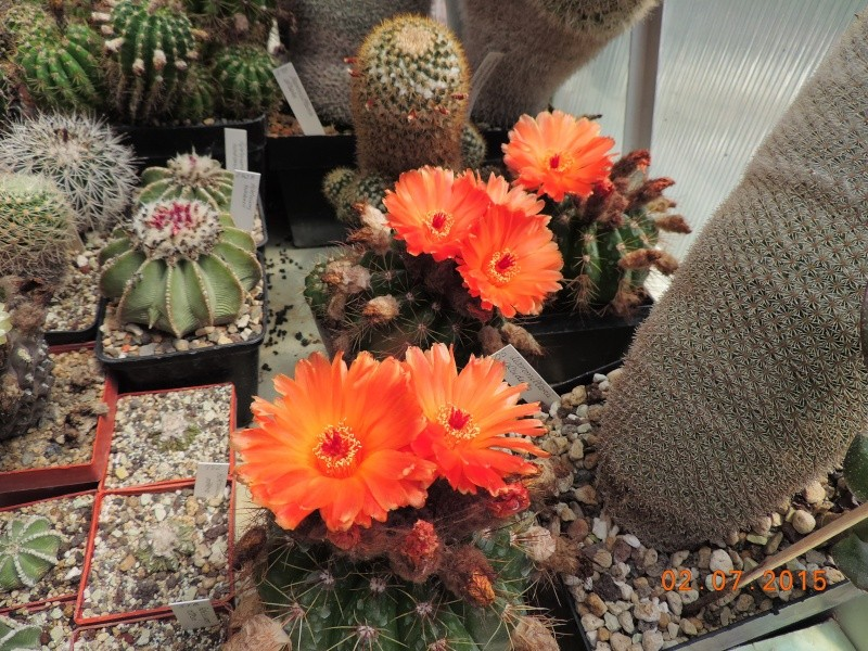 Cacti and Sukkulent in Köln, every day new flowers in the greenhouse Part 126  Bild_301