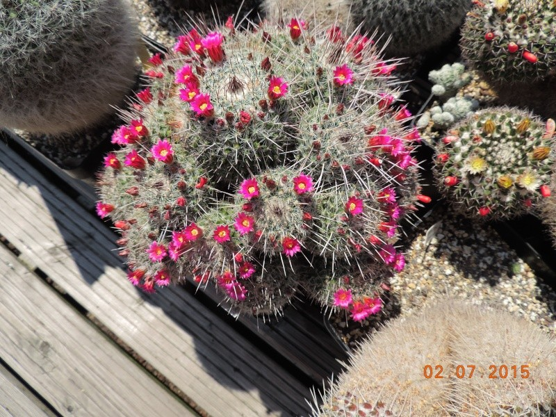 Cacti and Sukkulent in Köln, every day new flowers in the greenhouse Part 127 Bild_344