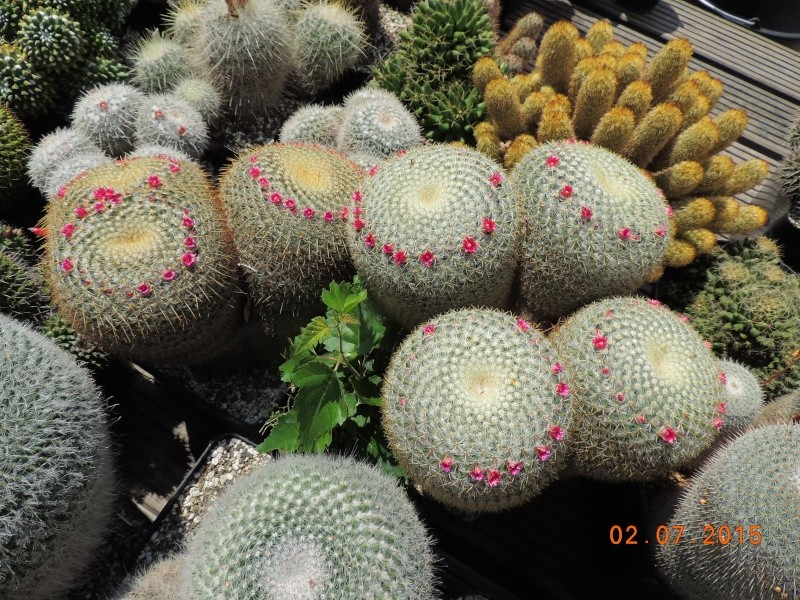 Cacti and Sukkulent in Köln, every day new flowers in the greenhouse Part 127 Bild_345