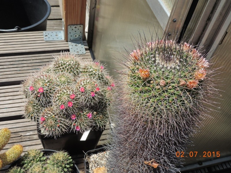 Cacti and Sukkulent in Köln, every day new flowers in the greenhouse Part 127 Bild_346