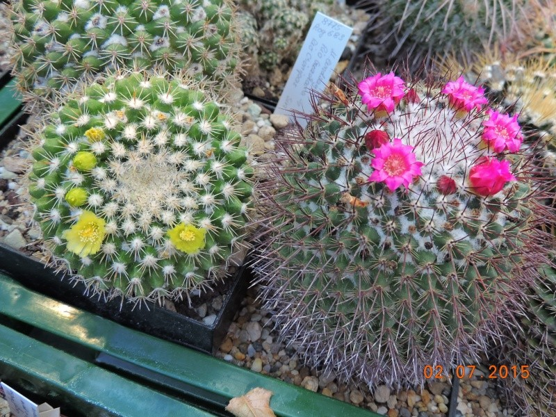 Cacti and Sukkulent in Köln, every day new flowers in the greenhouse Part 127 Bild_353