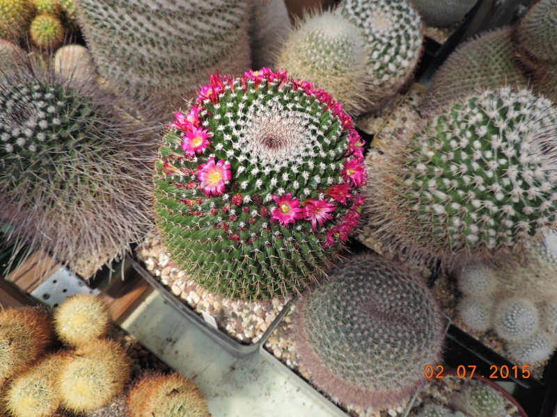 Cacti and Sukkulent in Köln, every day new flowers in the greenhouse Part 127 Bild_355
