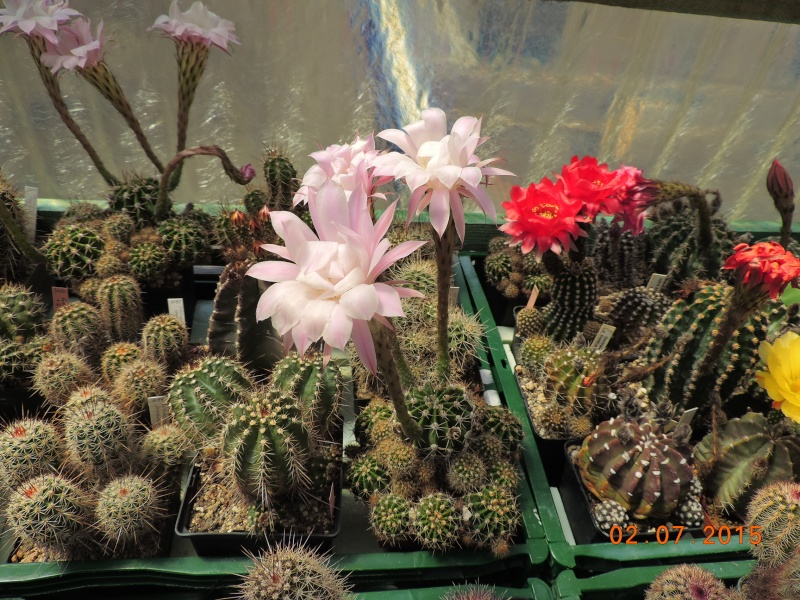 Cacti and Sukkulent in Köln, every day new flowers in the greenhouse Part 127 Bild_358