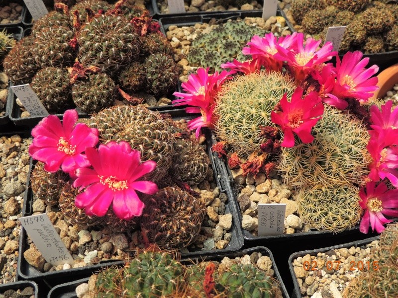 Cacti and Sukkulent in Köln, every day new flowers in the greenhouse Part 127 Bild_378