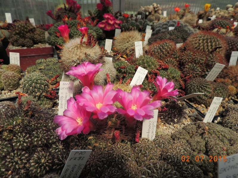 Cacti and Sukkulent in Köln, every day new flowers in the greenhouse Part 127 Bild_381