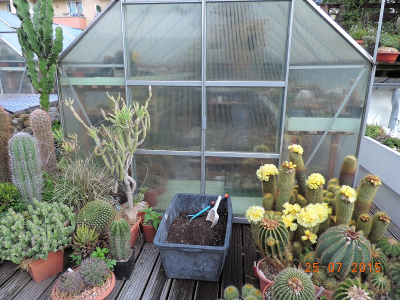 Cacti and Sukkulent in Köln, every day new flowers in the greenhouse Part 127 Bild_431