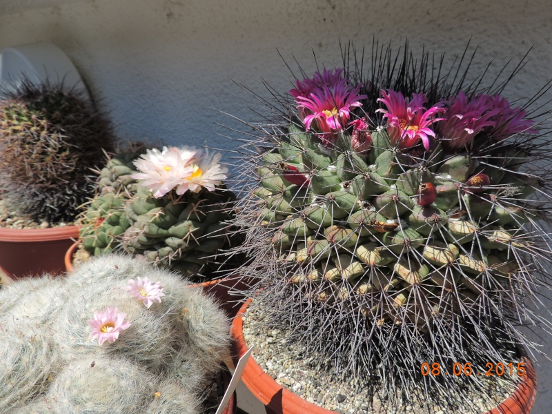 Cacti and Sukkulent in Köln, every day new flowers in the greenhouse Part 128 Bild_449