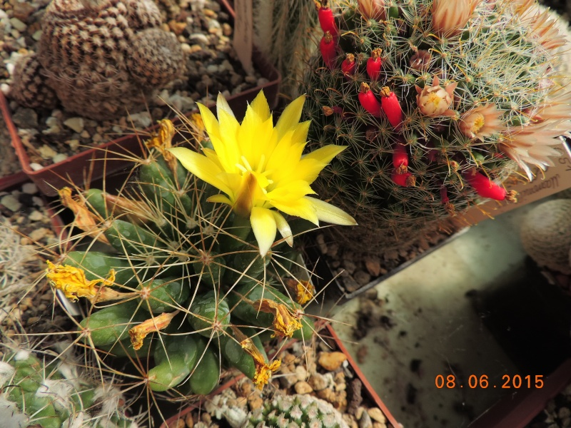 Cacti and Sukkulent in Köln, every day new flowers in the greenhouse Part 128 Bild_459